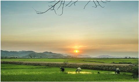 Kết quả hình ảnh cho nắng đồng quê
